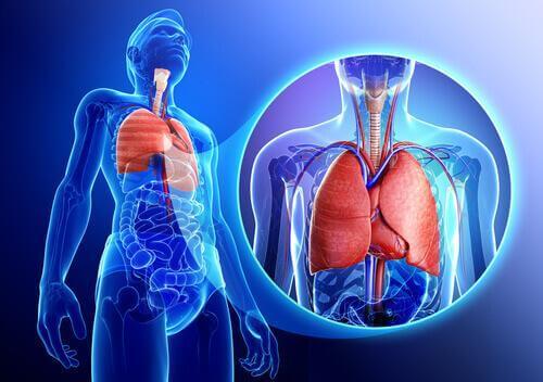 Лавровите листа отварят дихателните пътища