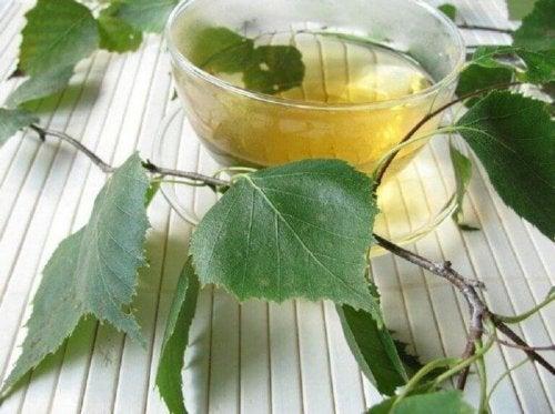 Диуретични чайове: чай от бреза в стъклена чаша и листа от бреза около него
