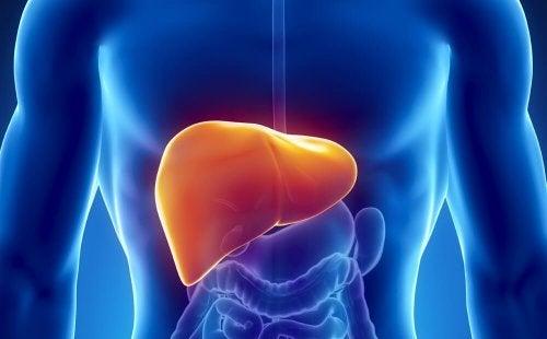 Прочистването на черния дроб е важно за здравето на целия организъм