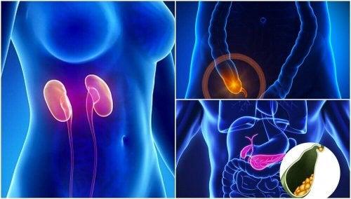 7 различни органи в човешкото тяло, без които можете да живеете