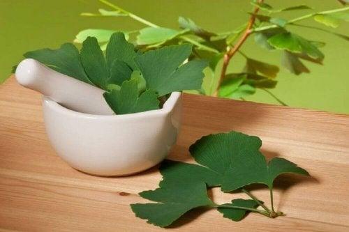 Шумът в ушите се лекува със зелени листа от гинко билоба