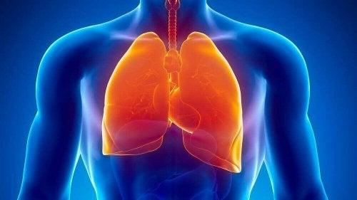 туберкулоза и изпотяване