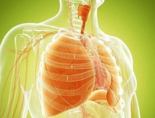 Натурални средства за детоксикация на белите дробове