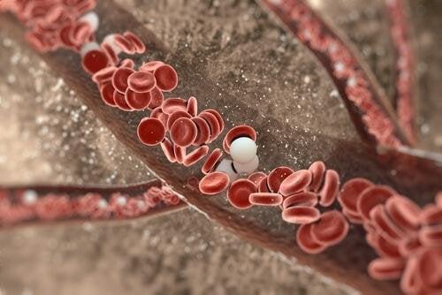 Куркумата спомага пречистването на артериалните стени.