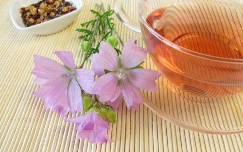 Синузитът: билков чай в чаша