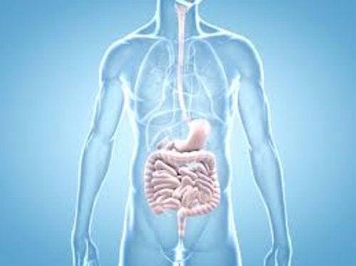 Първите признаци на рака: картина, рисунка на човешко тяло и червата