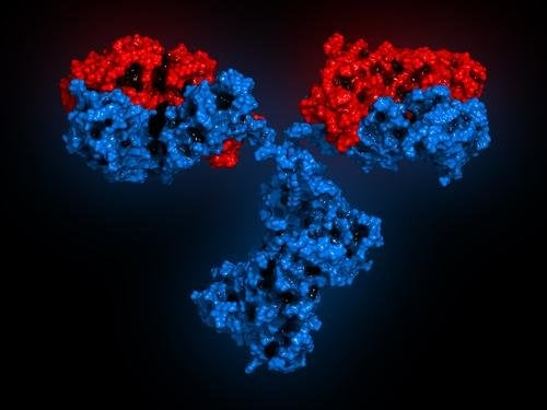 Има различни видове антитела или имуноглобулини.