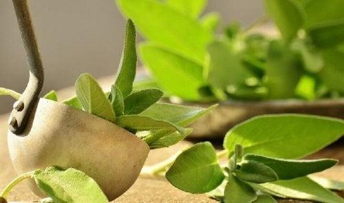 Облекчете болката в петите: градински чай, листа и един черпак
