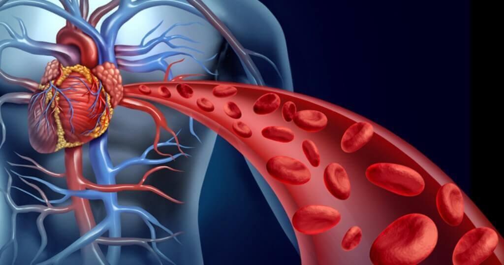 Менопаузата се отразява на сърцето: картинка с приток на кръв