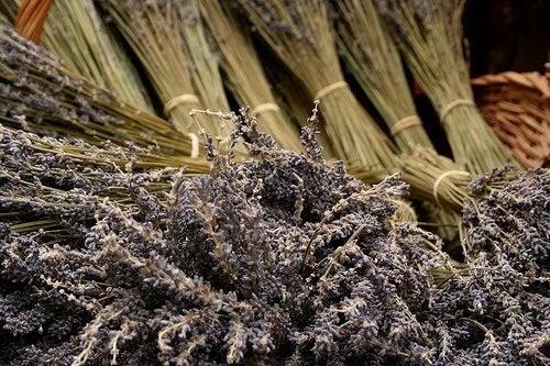 Лавандуловото масло: снопчета от лавандула, навързани едно до друго
