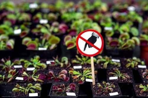 Седем опасни растения, които не трябва да имате у дома