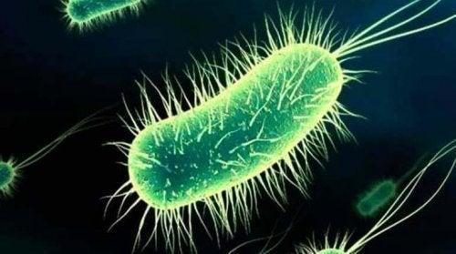 Много често появата на цистит след секс се дължи на бактерии.