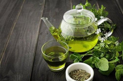 За стопяване на килограми: зелен чай в каничка и в чаша
