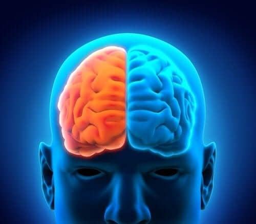 полукълба на мозъка