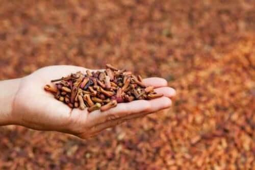 5 лечебни приложения на подправката карамфил