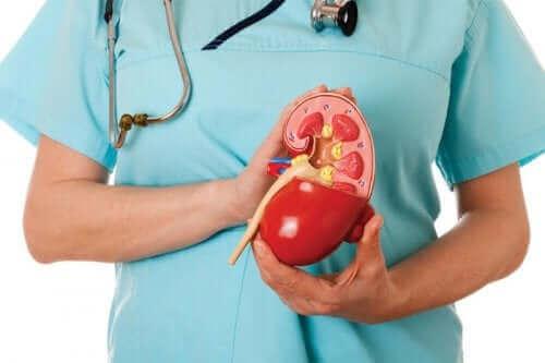 Лечение на проксималната бъбречна тубулна ацидоза