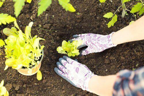 Снимка на засаждане на растение в земята