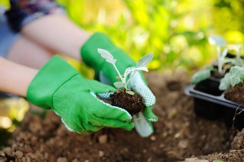 Пресаждането на растенията: кратки полезни съвети и препоръки