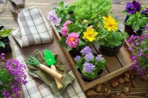 Пресаждането на растенията: снимка на дървена щайга с цветя и градински инструменти