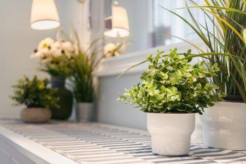 9 съвета за отглеждане на стайни растения