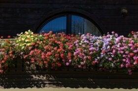 5 ароматни цветя, подходящи за малка градина