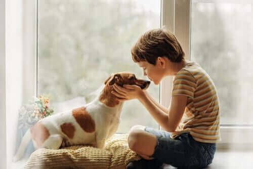 Коронавирус и кучешките целувки: безопасни ли са те?
