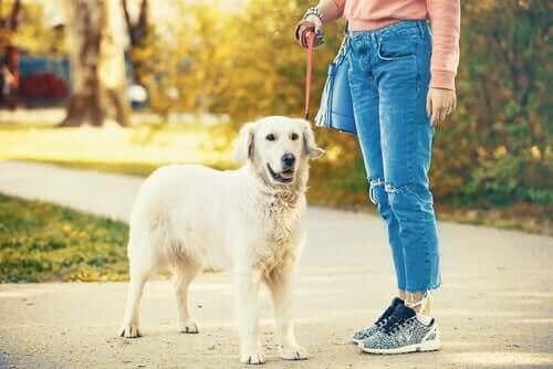 Кризата с COVID-19: куче и неговия собственик на разходка