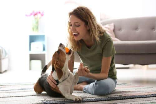 Момиче и куче си играят