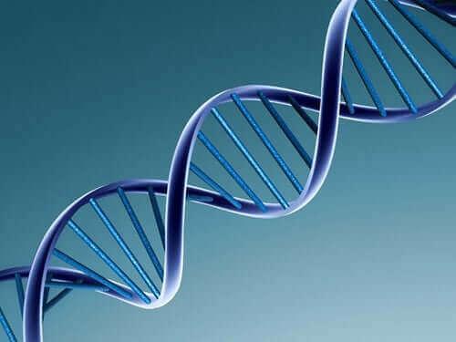 Как се променят вирусите: молекула ДНК
