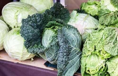 Къдраво зеле: снимка на една къдрава зелка и обикновено зеле