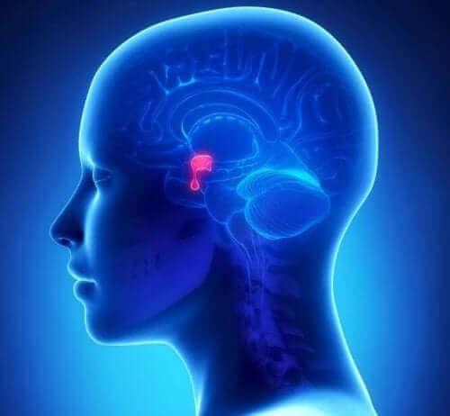 Аденоми на хипофизата: снимка на глява и мозъка