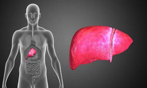 Жлъчна атрезия: човешко тяло и черен дроб