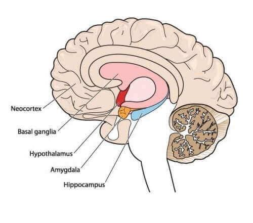 Проблеми при ходенето: запознайте се с атетозата