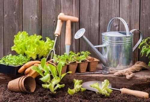 Градска градина: различни градински инструменти и засадена маруля в саксии