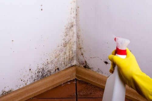 Премахване на мухъл от стените
