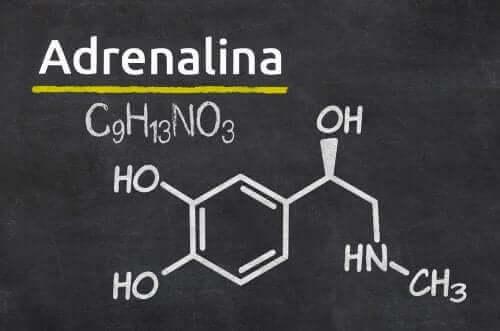 Епинефринът: молекула на адреналина