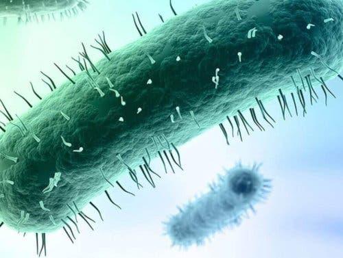 Бактериите от семейството на микоплазмите се предават по полов път.