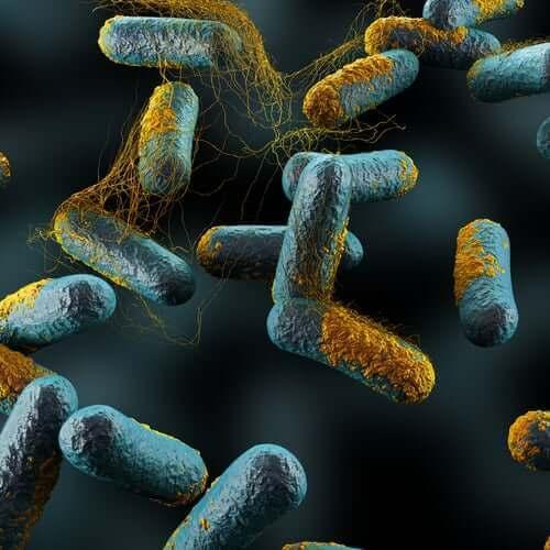 Медът и бебетата: бактерии на ботулизъм