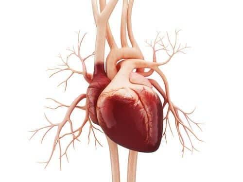 Рисунка на човешко сърце