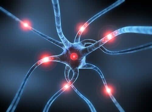 Снимка на нерв от близък план