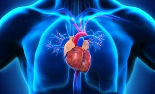 Схема на сърце в човешкото тяло