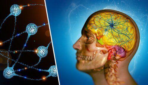 Схема на главата и мозъка