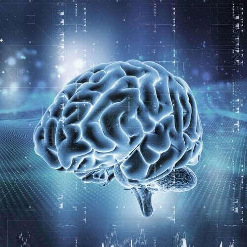 Мозъчната система за възнаграждение: Как функционира?