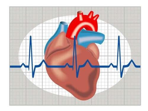 Дигитален модел на сърце