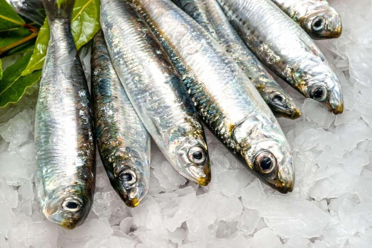 Сардините са важни за всички видове диети.