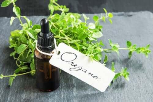 Как да си приготвите масло от риган и ползите от употребата му